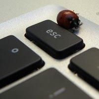 Marienkäfer auf MacBook